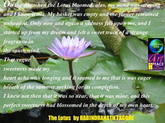 The Lotus2